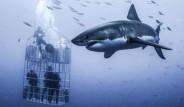 6 Metrelik Devasa Köpek Balığını Görüntülemek İçin Ölümü Göze Aldılar