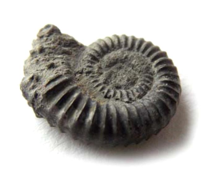 7 Yaşındaki Küçük Kız Tesadüfen 65 Milyon Yıllık Fosil Buldu