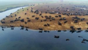 Fotoğrafı Gören Afrika Sanıyor ama Burası Balıkesir!