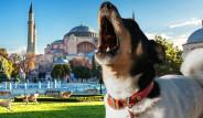 Köpekler Ezan Sesini Duyduklarında Neden Hep Birden Ulumaya Başlıyor?