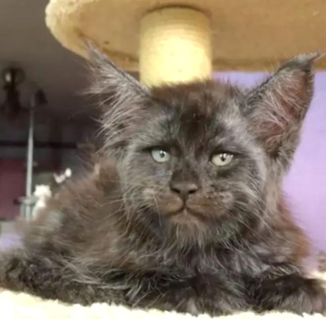 Bu Kedinin Fotoğrafını Gören Photoshop Sanıyor!