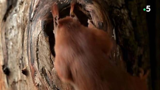 Sincabın Doğum Yaptığı Anlar Anbean Kamerada