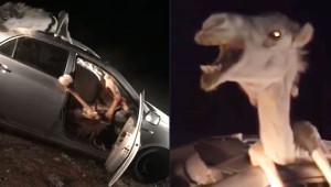 Twitter'ı Sallayan Görüntü! Hızla Giden Otomobil Deveye Çarptı