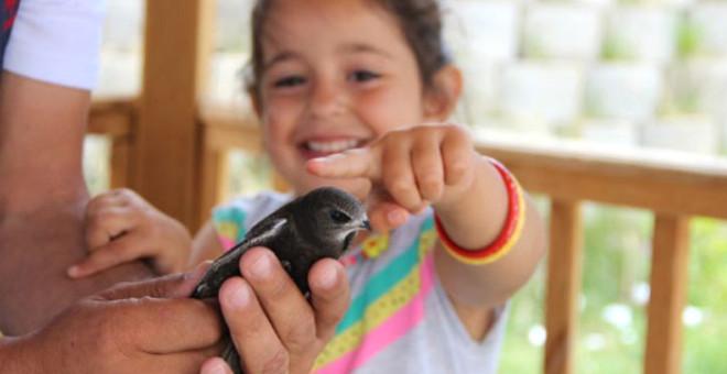 Esrarı Hala Çözülemeyen Ebabil Kuşu Erzurum'da Bulundu!