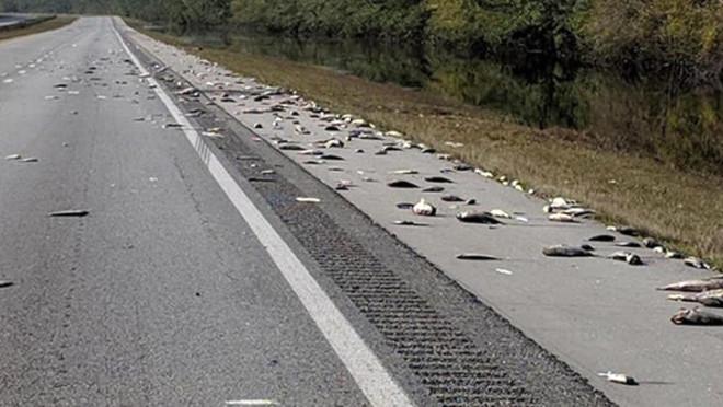 Florence Kasırgası Sonrasında Korkunç Görüntüler Ortaya Çıktı