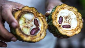 Ne Olduğunu Kimse Tahmin Edemiyor! İşte Doğal Ortamlarında Sebze ve Meyveler