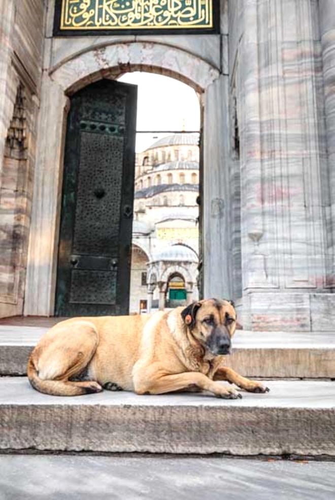 Köpekler Ezan Sesini Duyduklarında Neden Birden Ulumaya Başlıyor?