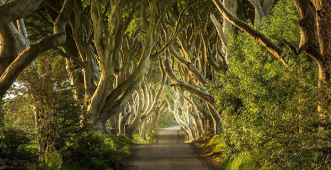 DARK HEDGES (İRLANDA)