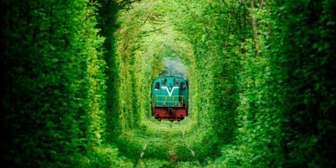 Bu Büyüleyici Tüneller Taşdan Değil Ağaçtan