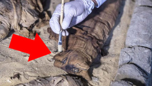 Mısır'da Milattan Önce 6000'e Ait Kedi Mumyaları Bulundu!