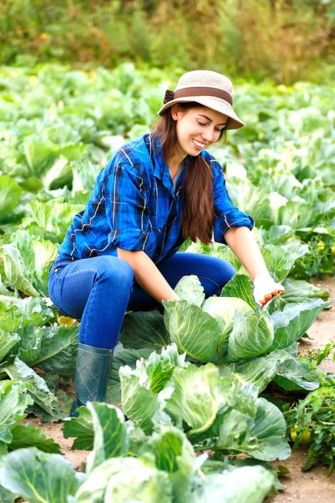 Kanser riskini düşürmesiyle de bilinen lahananın daha önce hiç duymadığınız bir faydası daha var: Lahana yapraklarını ağrıyan yere sardığınız takdirde, iyileştirici etkisi var.