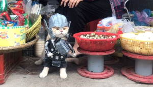 Fenomen Kedi Cho, Meslek Beğenmiyor!