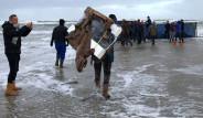 Deniz Kıyısına Vurdu! Vatandaş Kapmak İçin Yarıştı