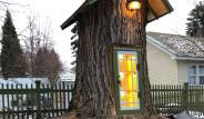 110 Yıllık Ölü Ağacı Deşip, İçine Yerleşti!