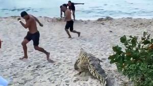 Ünlü Plajda Timsah Dehşeti! Turistler Ne Yapacağını Şaşırdı