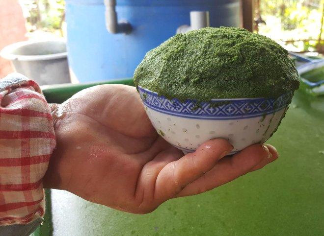 Boyutuyla Hayrete Düşüren Dünyanın En Küçük Meyvesi!