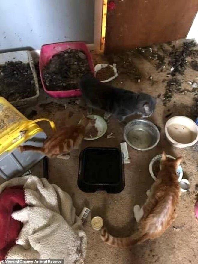 Kan Donduran Olay! Öldürdüğü 63 Kediyi Evinin Buzluğunda Sakladı
