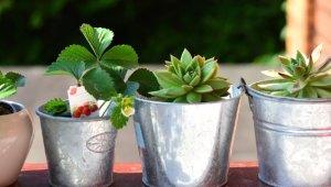 Galeri: Balkonda Yetiştirebileceğiniz Bitkiler
