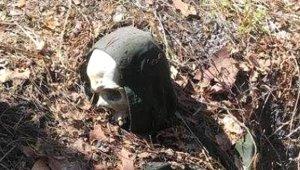 2 Yıldır Kayıptı! Kayıp Rus Gezginin Ağaca Kelepçeli İskeleti Bulundu