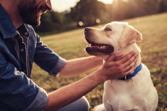 Bilim İnsanları Açıkladı: Köpekler Sakallı Erkeklerden Daha Temiz