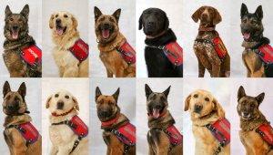 Van Jandarmasının 'Süper Burun' Dedektör Köpekleri