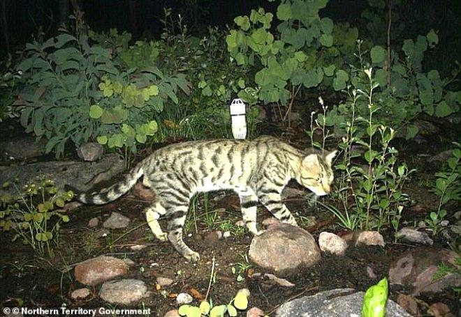 Havadan Atılan Zehirli Sosislerle, 2 Milyon Kedi Katledilecek!