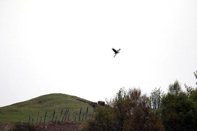 Kuzuyu Pençeleriyle Kapıp Havalandı! İşte Kartalın Avlanma Görüntüleri