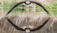 Amatör Fotoğrafçının Çektiği Kartalın Bakışları Sosyal Medyayı Salladı