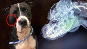 Hasta köpeğinin yüzüne ateş edip, can çekişen hayvanı çöpe attı!