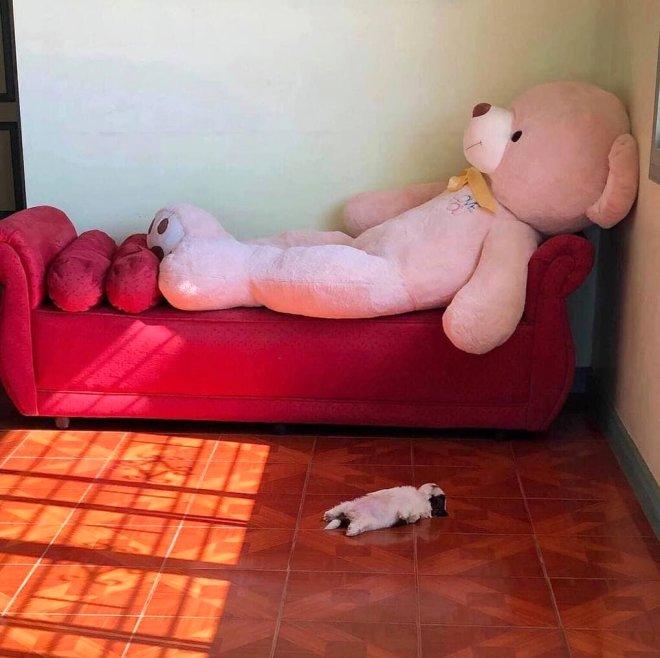 Bu köpeği uyurken gören şaşıp kalıyor! Sosyal medyada viral oldu