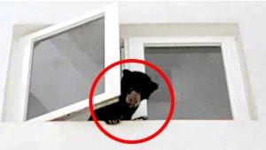 Yavru ayıyı köpek sanıp evine götüren şarkıcı tutuklandı!