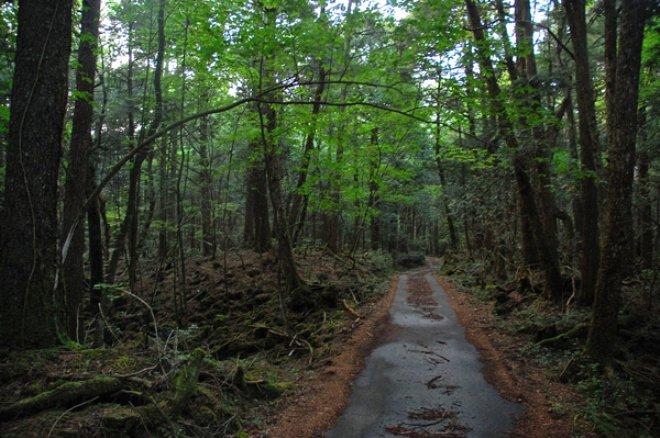 Bu ormana adım atan intihar ediyor! Korku filmlerine bile konu olan: Aokigahara