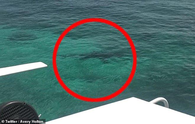 Meşhur tatil beldesinde facia! Köpek balıklarının saldırısına uğradı, çığlık çığlığa can verdi