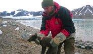Yavru tilkinin ekmek mücadelesi: 76 günde 3 bin 506 kilometre yürüdü