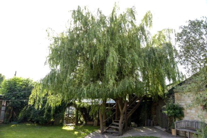 Gün batımını engelliyor diye söğüt ağacını kesecekti, muhteşem eve dönüştürdü!