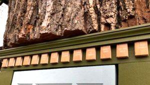 Çürümekte olan 110 yıllık ağacı mini kütüphaneye dönüştürdü!