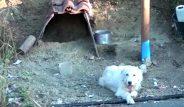 Vefakar köpeğin inadı yürek sızlatıyor! 18 aydır sahibinin öldüğü yeri terk etmiyor!