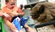 Yavru yarasa 2 yaşındaki çocuğun karyolasına girip, kabusu yaşattı!