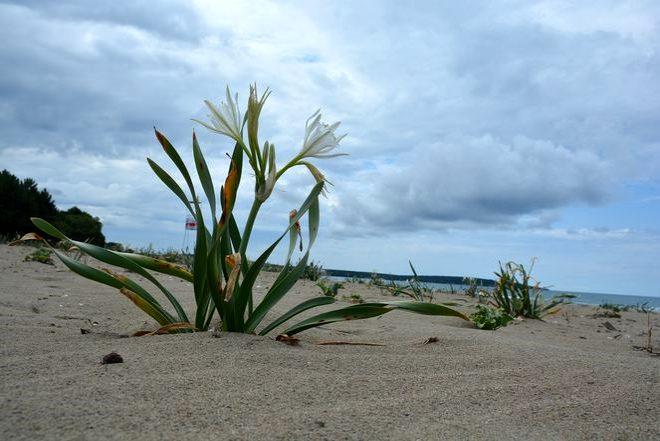 Bu bitkiyi koparanın başı derde giriyor! 60 bin lira cezası var