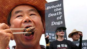 Diri diri yakılan köpekler için binlerce hayvansever ayakta! Korkunç festivale tepkiler çığ gibi büyüyor