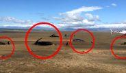 Helikopter turunda tesadüfen gördü! İzlanda'da 50 ceset kıyıya vurdu
