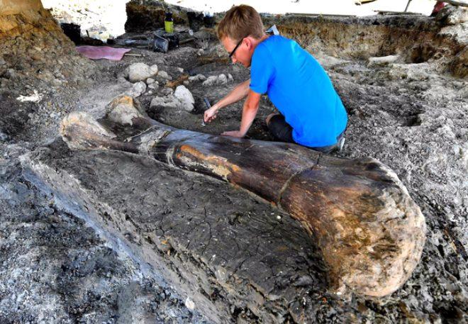 140 milyon yıllık keşif! 500 kiloluk dinozor kemiği şoke etti
