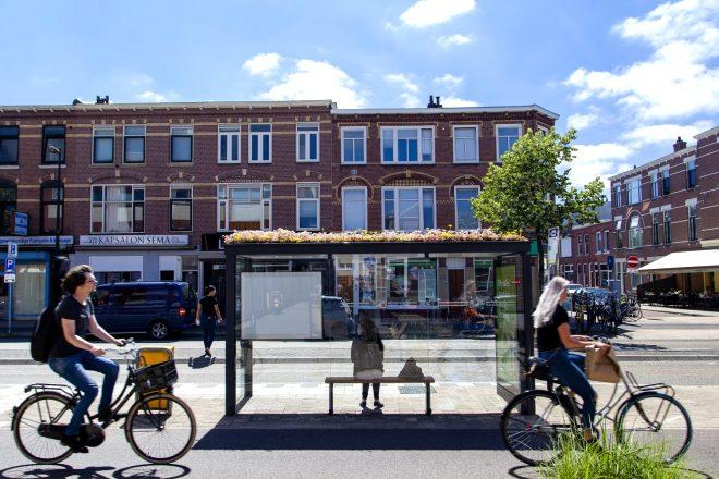 Hollanda'da, arıların nüfusunu arttırmak için çatılar yeşillendi!