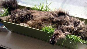 Bu kedilerin uyumak için tercih ettiği mekanlar ve pozisyonlar akıl alır gibi değil!