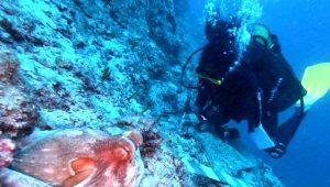 Antalya'da bulunan 3 bin 600 yıllık gemide çalışmalar başladı! Dünyanın en eski batığı