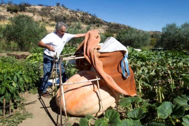 Hobi olarak çiftçilik yapıyordu, 215 kiloluk devasa kabak yetiştirdi