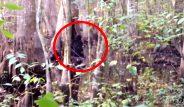 İlk kez böyle net görüntülendi! Ormandaki siyah yaratık korku saldı