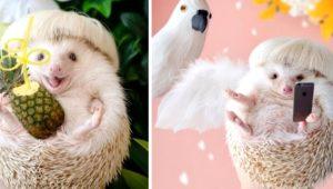 Galeri: Instagram'ın yeni fenomeni: Sevimli kirpi