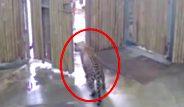 Babaannesiyle parkta gezen 2 yaşındaki çocuk, kafesi açık bırakılan bir leoparın saldırısına uğradı!
