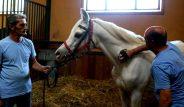 Polonya'dan Bursa'ya 3 trilyona getirilen Arap atı, soyundan gelen 63 at ile servet kazandırdı!